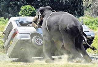 Animales ahuyentando a las personas - WTF - 6