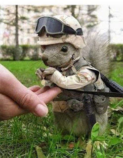 Funny Squirrel Soldier