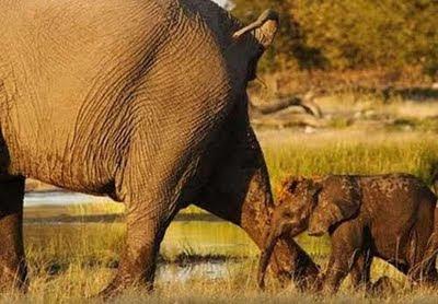elefantes Fotos de Animales chistosas.