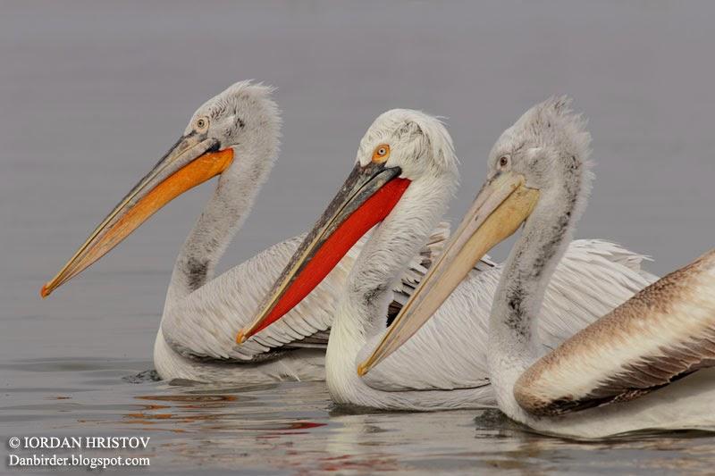 bird photography in Bulgaria by Iordan Hristov