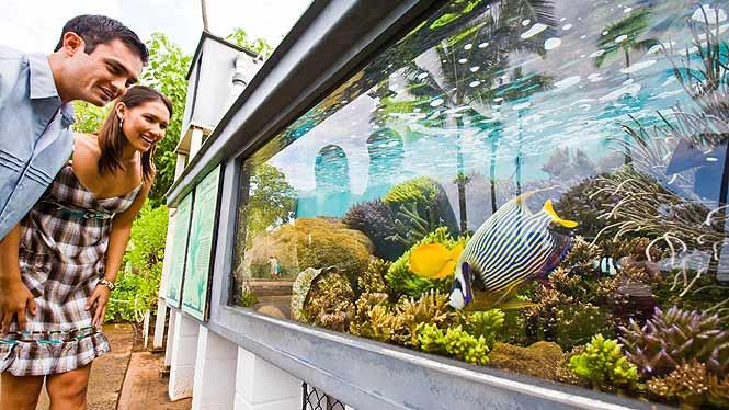 Hawaii Public Aquarium : waikiki aquarium the waikiki aquarium is and isn t a tourist ...