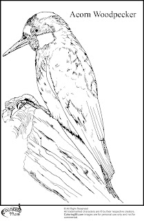 acorn woodpecker coloring pages