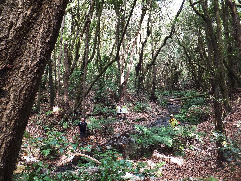 Parque Natural de Garajonay (Isla La Gomera)