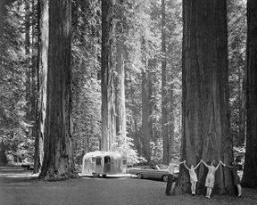 Camping in the Redwood Forest