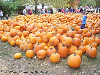 Piles of pumpkins at http://www.amamascorneroftheworld.com