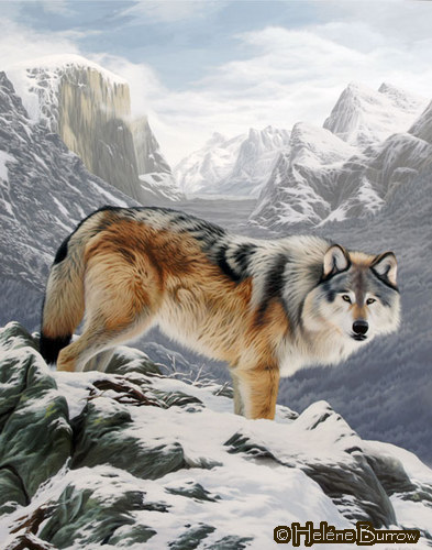 white wolf   authentic native american and wildlife paintings of hel u00e9ne burrow