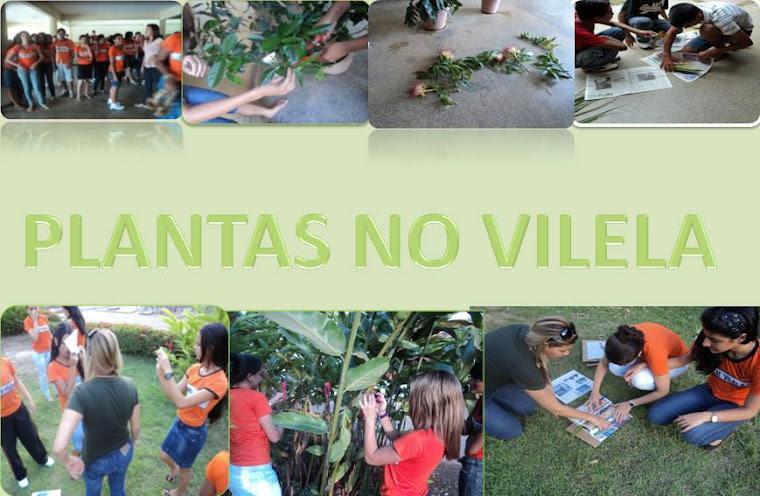 Plantas no Vilela