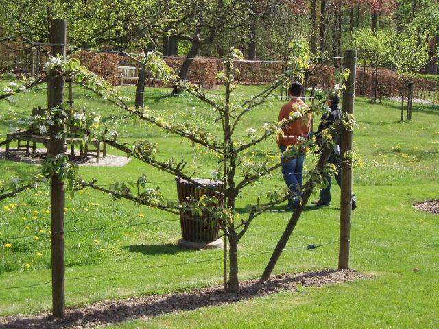 Metido en jardines poda de rboles frutales iv poda de for Jardines con arboles frutales
