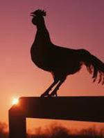 Gambar 2. Ayam berkokok