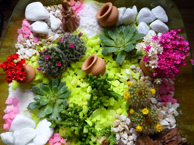 mini jardim suculentas:Mini Jardin De Suculentas