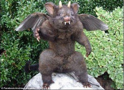 動物標本 人面負鼠