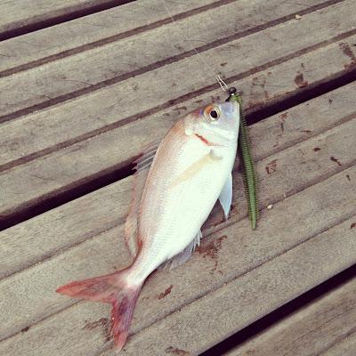 Pageot en Rockfishing, power isome vert taille L,TP Fish Arrow wheel Head