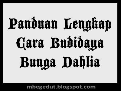 Budidaya Bunga Dahlia, Panduan Budidaya Bunga Dahlia, Budidaya Bunga Dahlia Yang Baik, Cara Budidaya Bunga Dahlia