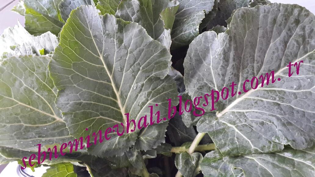 kara lahana