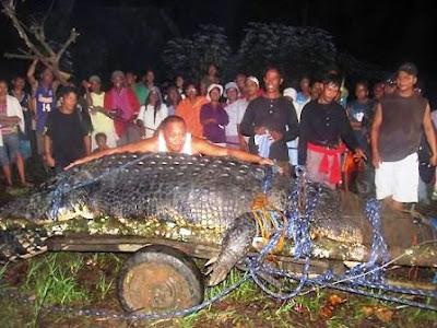 Cocodrilo Gigante filipino animal extraño raro
