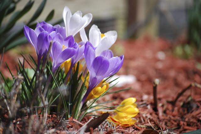صور فصل الربيع , صور جديدة 2012 , الربيع HD , مناظر جميلة