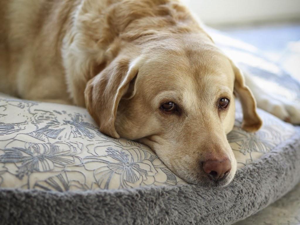 """<img src=""""http://2.bp.blogspot.com/-mU3O9qRe4OM/UtqeIQpSVqI/AAAAAAAAI08/RV9wQlkjIRg/s1600/sad-dog.jpeg"""" alt=""""sad dog"""" />"""