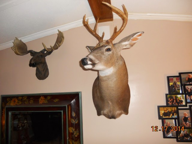What Beautiful Trophies This Is Justins 7 Point He Huge Look At My Little Moose Head I Would Love To Have A Real