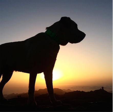 Perro sol vistas