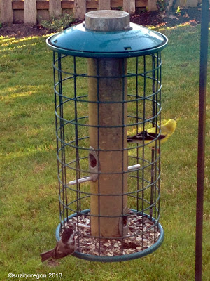 Chickadee and Goldfinch