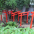 鳩森八幡神社,甲賀稲荷社,鳥居,千駄ヶ谷〈著作権フリー無料画像〉Free Stock Photos