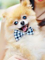 http://translate.google.es/translate?hl=es&sl=pt&tl=es&u=http%3A%2F%2Fwww.villartedesign-artesanato.com.br%2F2015%2F06%2Fcomo-fazer-gravata-borboleta-para.html