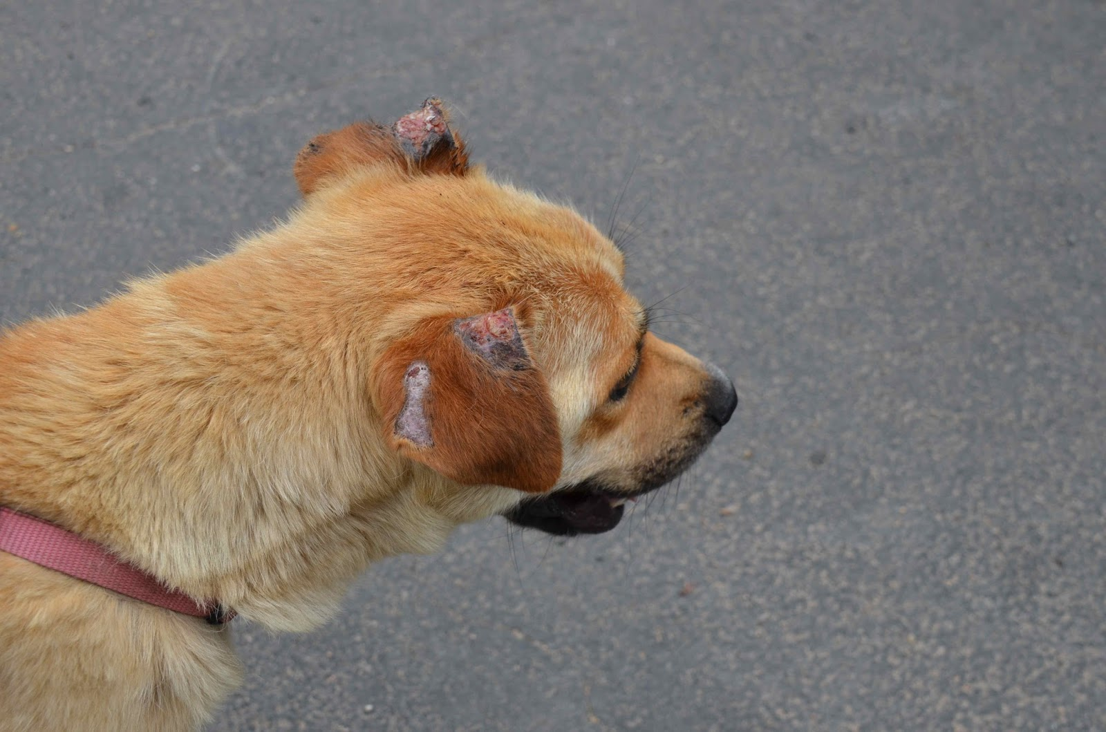 Black Flies That Bite Dogs