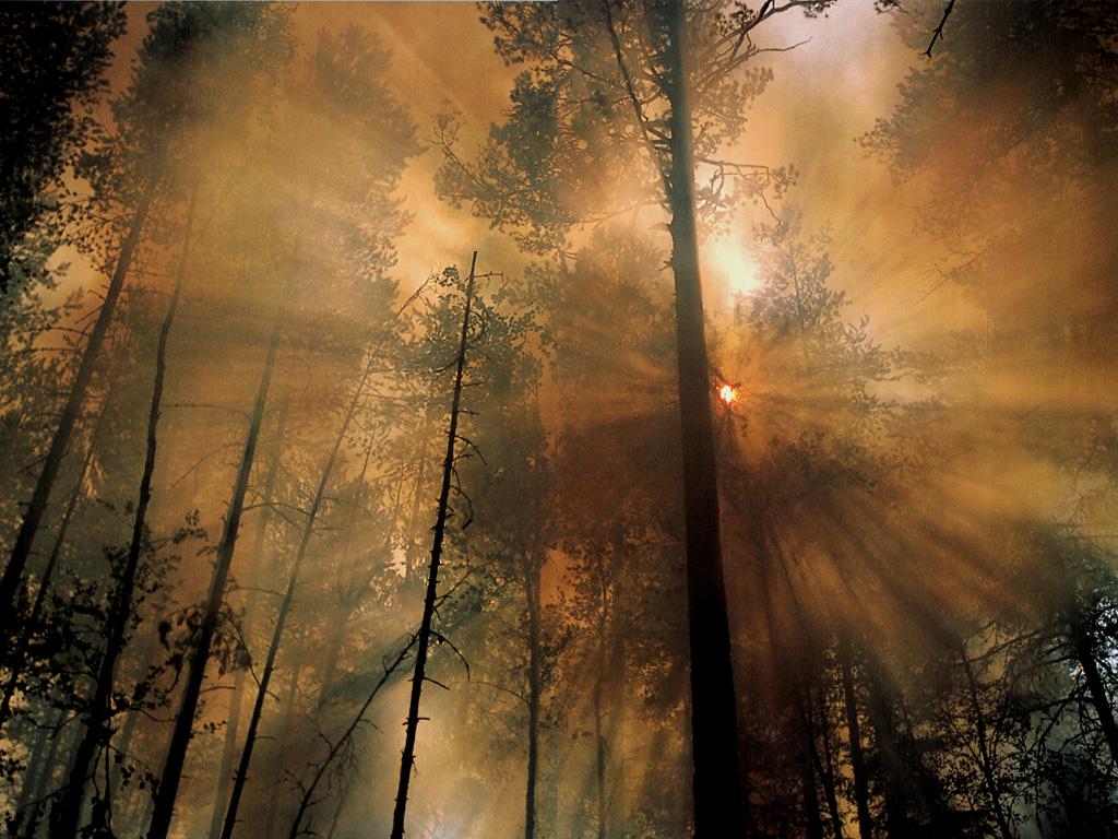 http://2.bp.blogspot.com/-mUrdBhemmS4/T0iyseStR-I/AAAAAAAAAD0/AgZkKuA2QVc/s1600/JLM-NatGeo-forest+fire_the+morning+after.jpg