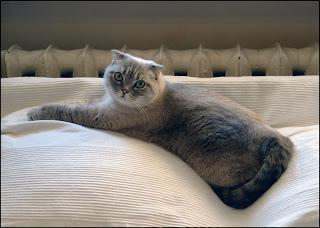 journal d'un chat