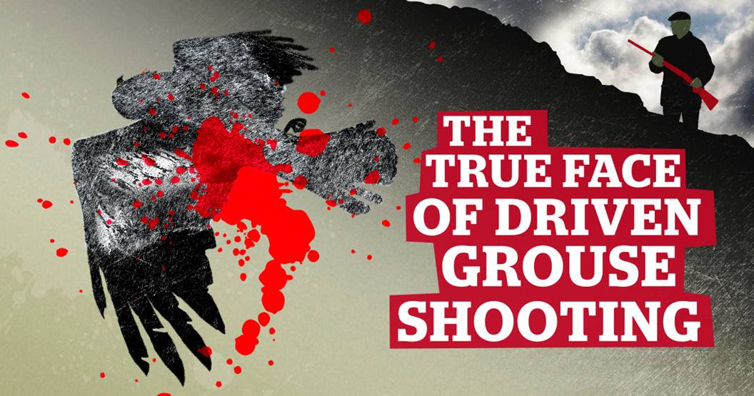 BAN GROUSE SHOOTING