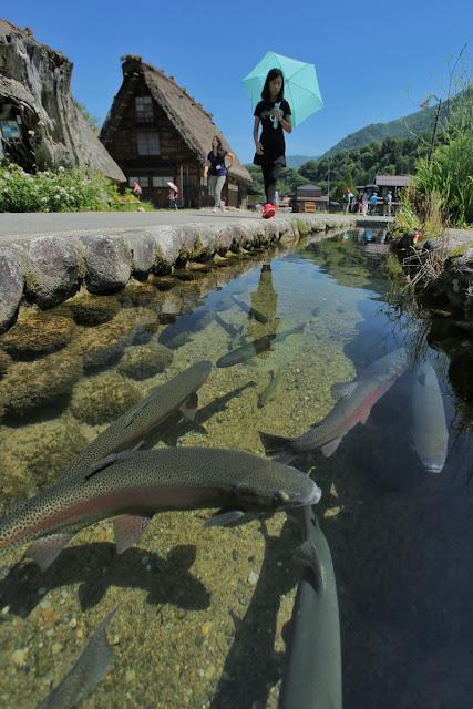 "<a href=""http://mataram.info/things-to-do-in-bali/visitindonesia-banda-marine-life-the-paradise-of-diving-topographic-point-inward-fundamental-maluku/"">Indonesia</a>best destinations : I'll Take In Again: Shirakawa-Go"