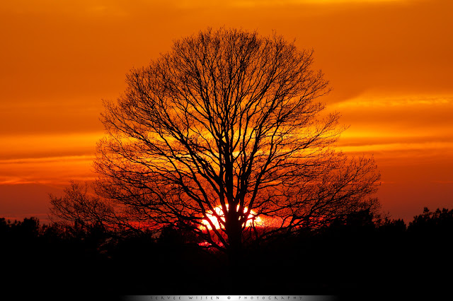 Eik @ Zonsondergang - Oak tree @ sunset