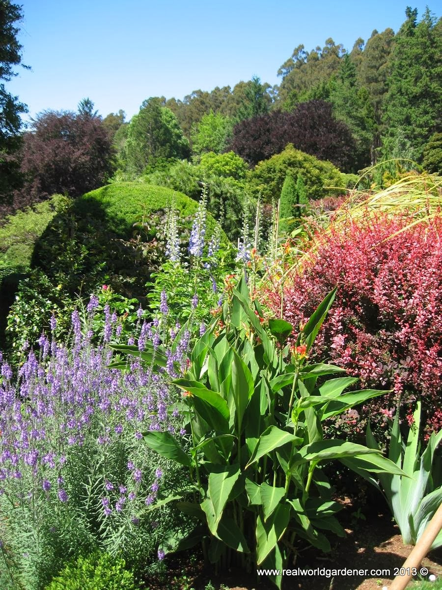 Real world gardener australian garden is colour for Herbaceous border design examples