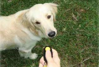 adiestramiento canino con clicker