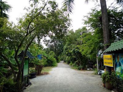 Nong Chok Zashnain