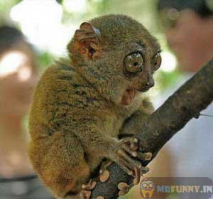 funny-animals-picture.jpg