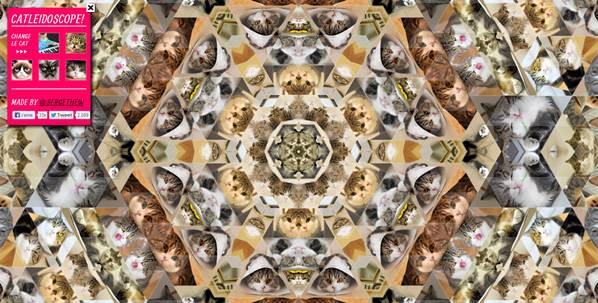 des chats en kaleidoscope
