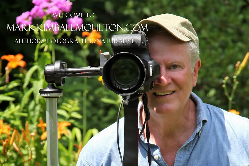 Mark Kimball Moulton  Author/Photographer