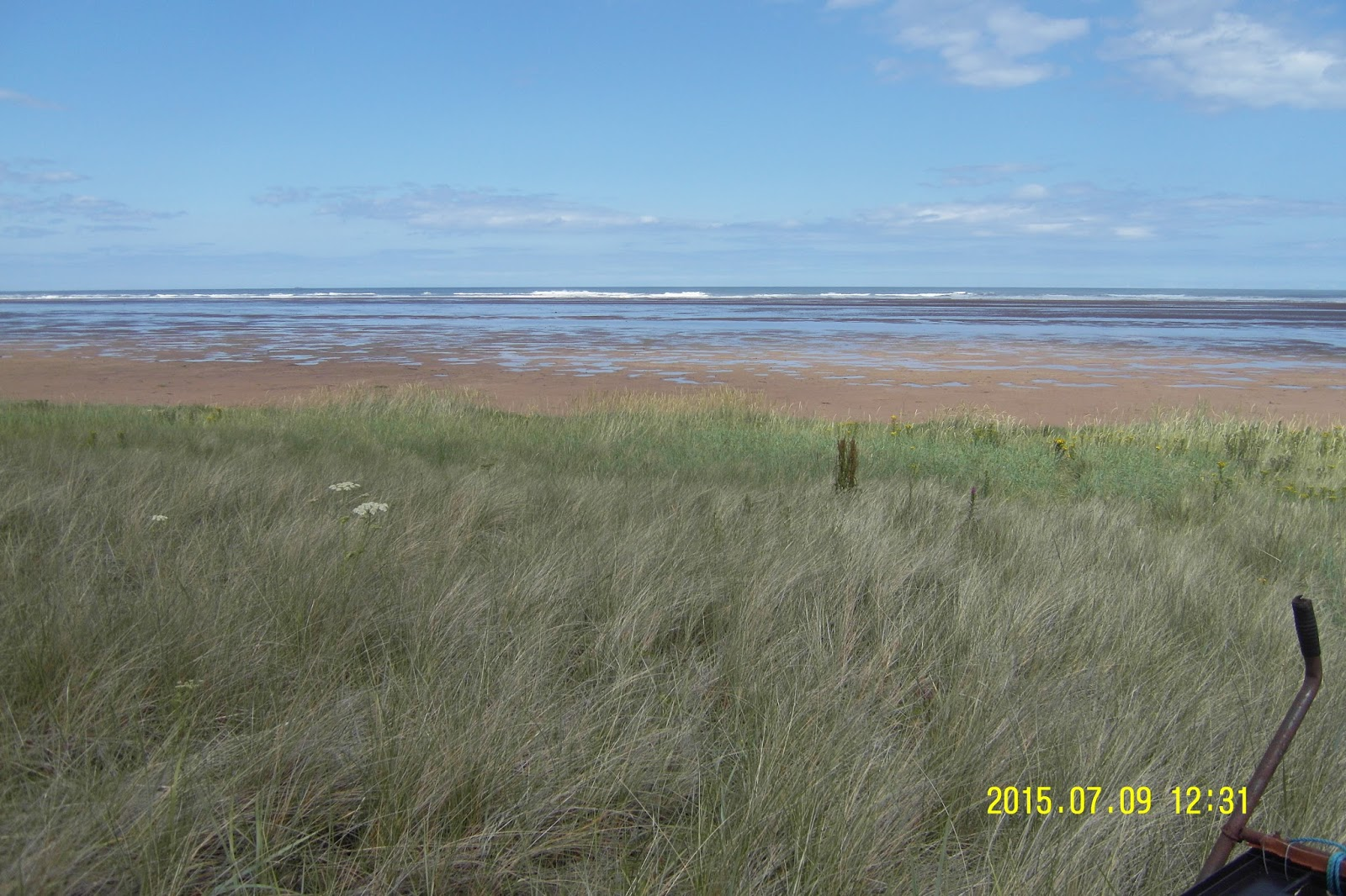 Blue lyme grass blue dune - You Can See The Clear Boundary Between The Sand And The Pioneer Species Such As Sea Couch And Lyme Grass These Hardy Grasses Help Stabilise The Dune By