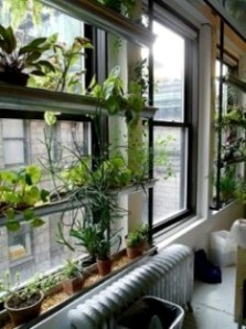 Jardines interiores vida ecofriendly for Bioshock jardin de las recolectoras
