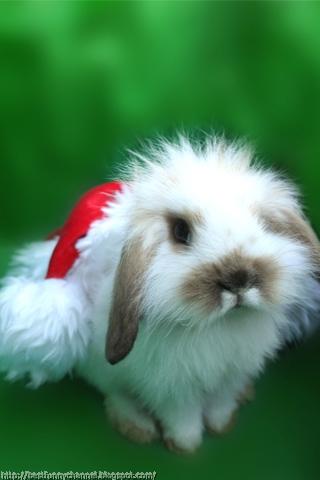 Fluffy Christmas bunny.