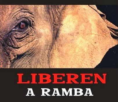 Campaña LIBEREN A RAMBA