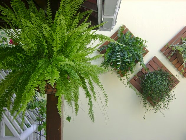 plantas para jardim interno: pequenas parece impossível o convívio com as plantas mas ter plantas