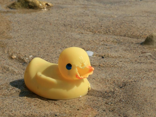 Tom Grundy\'s Travels: Rubber Ducks - lost at sea