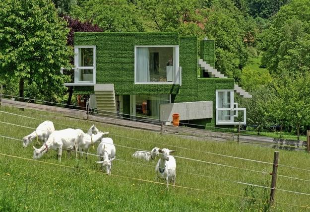 في النمسا واحد من أغرب المنازل التي شيدت وتم تغطيتها بالعشب الأخضر Grass-Covered-House-in-Frohnleiten-by-ORTIS-GmbH-8