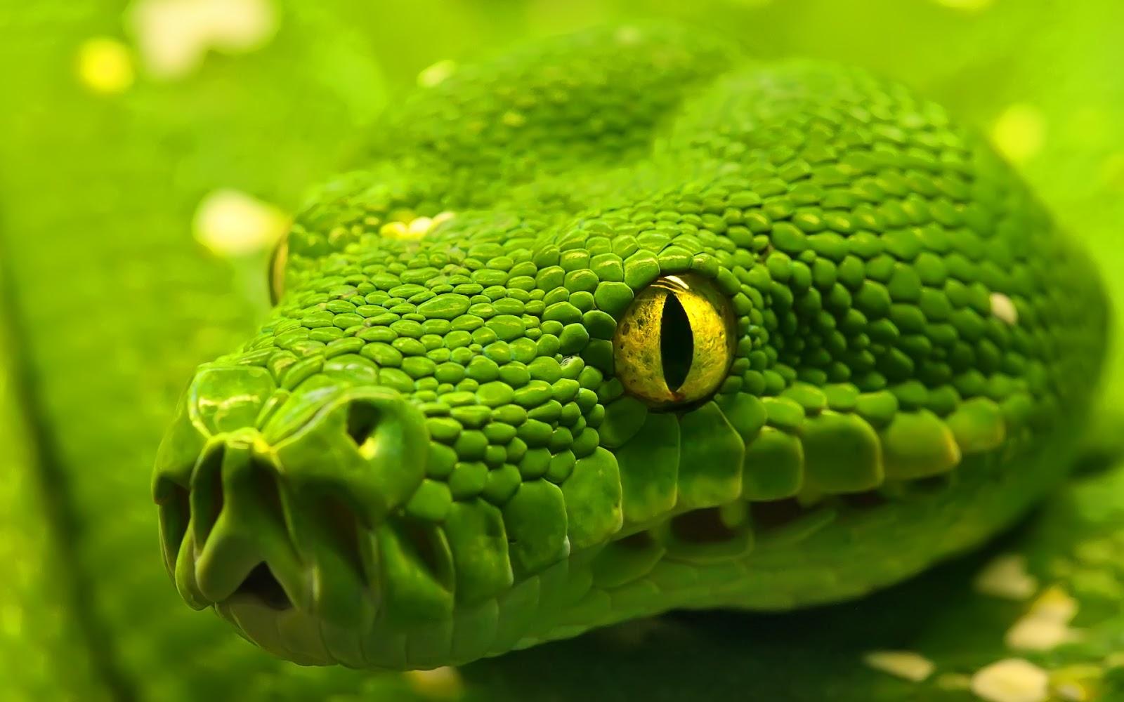Le symbole du serpent Serpent+photo