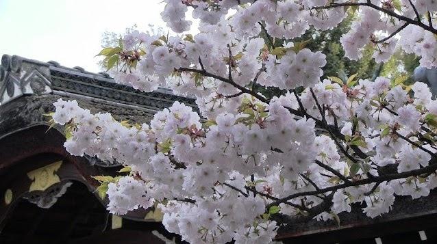 sakura jardin kyoto