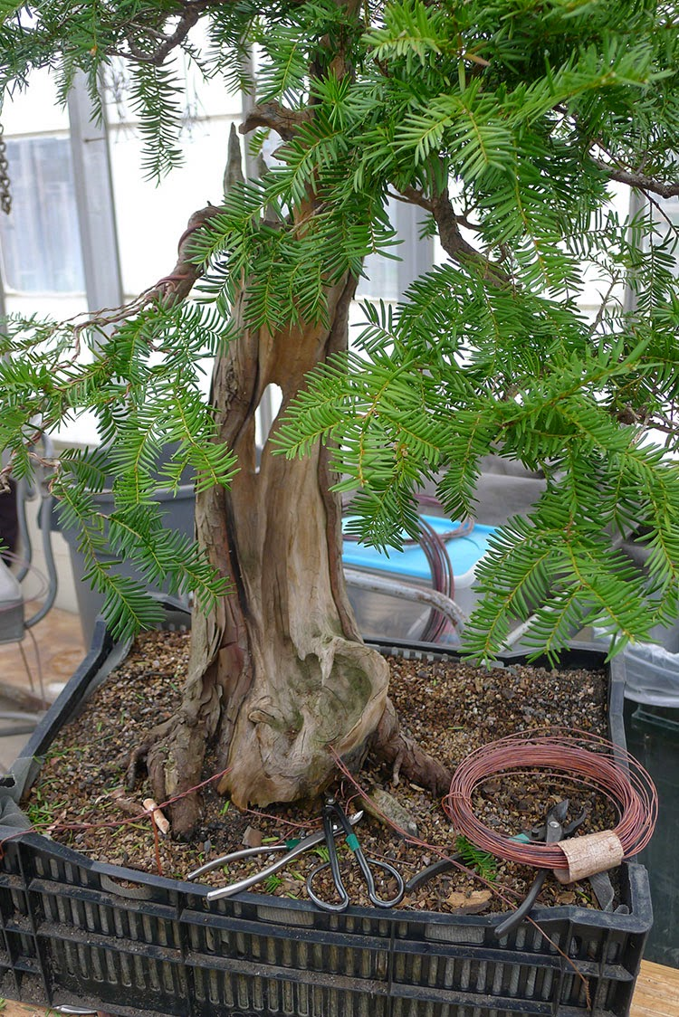 Earth Words Bonsai Expert Visits Matthaei Botanical Gardens