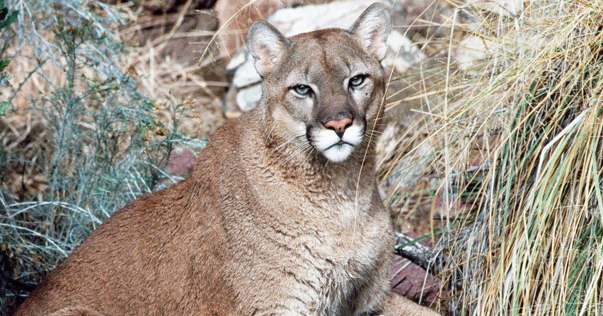 The Crazy Cougar Blog