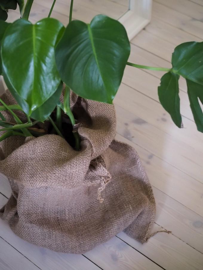 juuttisäkki suojaruukkuna, ruukunsuojus, vihersisustus, vihersisustaminen, erilainen suojaruukku, suojus viherkasville